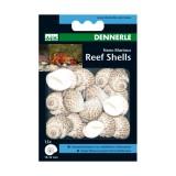 DENNERLE Marinus ReefSchells - Coquilles pour Bernard l'hermite