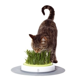 CAT IT Senses Herbe de rechange